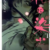 第21回手塚治虫文化賞マンガ大賞はくらもちふさこさん「花に染む」が受賞!実写映画化か