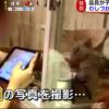 【めざましテレビ】虐待?ペットショップの子猫わしづかみ動画が話題