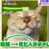 【めざましテレビ】歯ブラシにゃんこが話題!その謎と他の動物も検証!